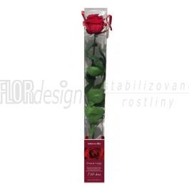 Stabilizovaná Růže Dárkové balení