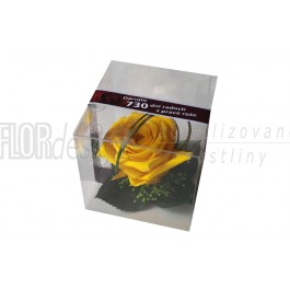 Krabička - hlava růže žlutá