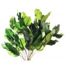 Salal Zelená