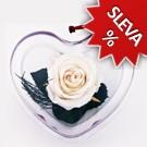 Srdce - Stabilizovaná růže Standart - bílá