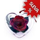 Srdce - Stabilizovaná růže Standart - burgundy