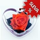 Srdce - Stabilizovaná růže Standart - oranžová
